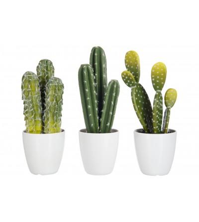 Cactus in vaso assortiti - Jline