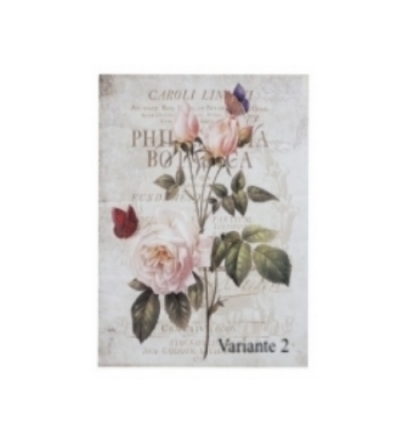 Quadro con Rosa rosa - Blanc Mariclò
